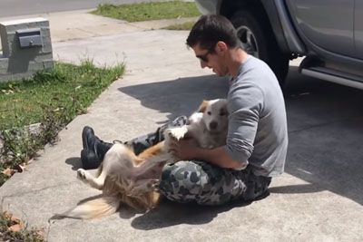 Sailor Returns Home After 2.5 Month Deployment. Just Wait To See Dog's Reaction!