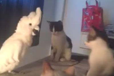 Bird Opens It's Mouth, Cats Have Priceless Reaction When They Realize It Sounds Like Them