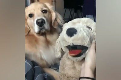 Dog Jealously Watches Its Owner Pet A Fake Dog, Then This Happens