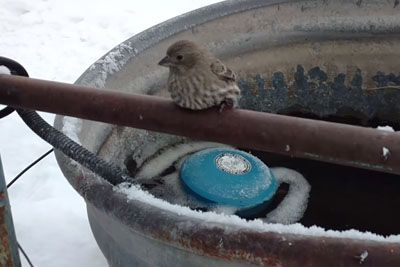 Older Man Finds Bird's Feet Frozen To Pipe. His Ingenious Rescue Went Viral Overnight