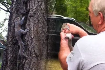 Family Tries To Release A Rehabilitated Squirrel, Things Go Horribly Wrong