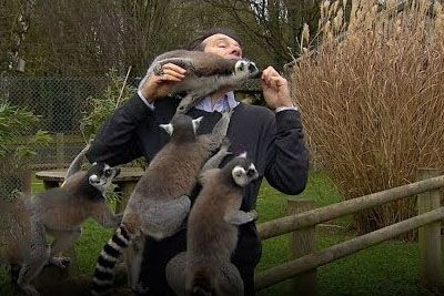 BBC Reproter Gets Mobbed By Lemurs On Live