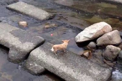 Man Sees A Dog By The River, Captures Most Adorable Moment