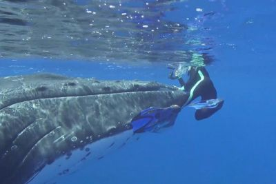 Massive Whale Pushes Diver, Then She Realizes It's Warning Her Of Danger