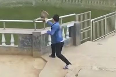 Man Tries To Push A Monkey In Pond, It Doesn't End Well