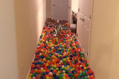 Owner Makes His Dog A Pit Of 5,400 Balls. It Was Dog's Best Day Of His Life!