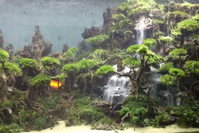 This Incredible Fish Tank Design Features A 'Waterfall' Made Of Sand