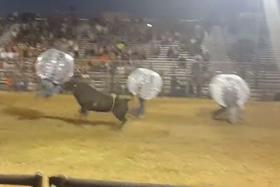 Crazy Guys Step In A Bull Ring Wearing A Giant Zorbing Balls