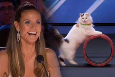 Super Trained Cats Perform Exciting Routine On America's Got Talent