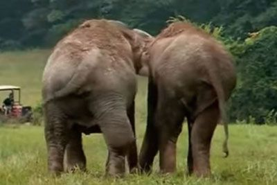 Tear-Jerking Moment When Circus Elephants Separated For 22 Years Reunite Again