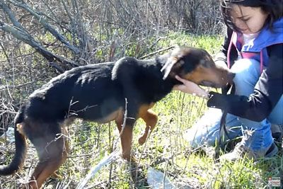 Woman Captures A Rescue Of Starving Injured Dog, Who Jumped Into Her Arms