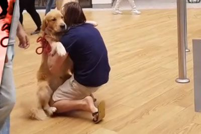 Golden Retriever Is Too Scared Of Escalators, Wants To Stay In Owner's Lap