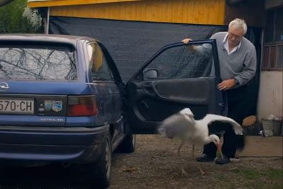Meet A Man From Croatia Who Does Everything For His Rescued Stork