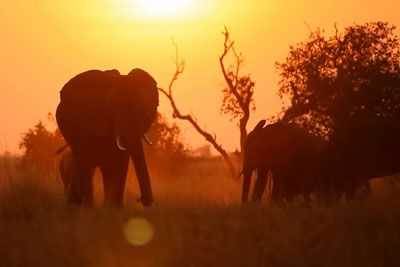 Year Zero Is Coming: The Year, When Wild Animals Are Gone