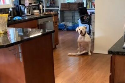 Dog With Broken Legs Gets Excited When She Sees Her Wheelchair