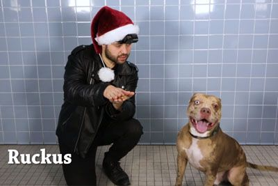 Animal Shelter Performs Magic For Dogs To Show Their Personalities And Help Them Find A Home