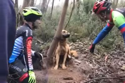 Dog Tied To Tree And Left To Die Gets Rescued By Group Of Cyclists