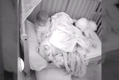 Dad Lets Pit Bull Sleep In Crib With Baby Only To Have Captured Footage Make Headlines