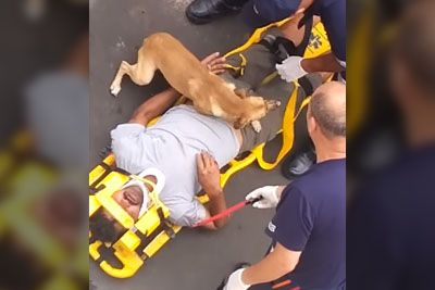 Protective Dog Jumps On Stretcher As He Refuses To Leave His Owner's Side In Brazil