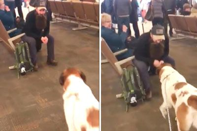 Dog Locks Eyes With Bearded Man At Airport Creeping Up Slowly Until Familiar Scent Sets Him Off