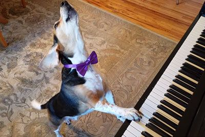 Talented Dog 'Buddy Mercury' Goes Viral With Singing And Playing The Piano