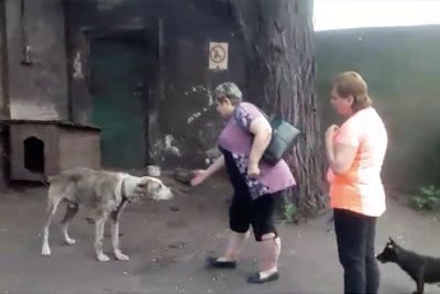 Stolen Dog Reunited With His Owner After 2 Years