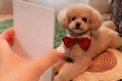 Owner Shows A Picture To Her Adorable Puppy: Dog's Response Will Melt Your Heart