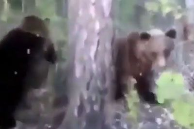 Man Kicks A Wild Bear And It Stops Minding Its Own Business