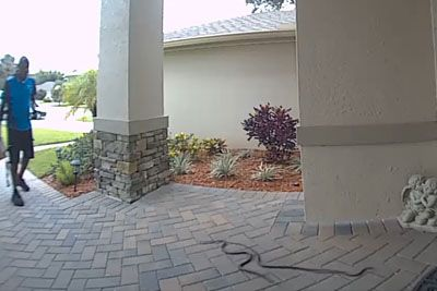 Amazon Delivery Man Encounters Snakes, Makes Everyone Laugh With His Reaction
