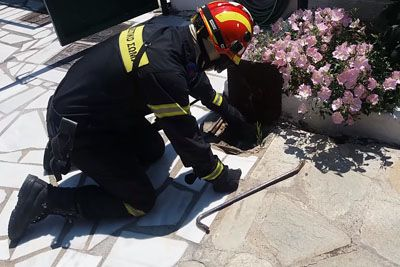 Firefighter Opens The Shaft, Gets Surprised By Attacking Snake