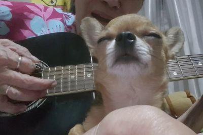 Owner Sings
