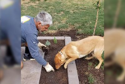 Dog Helps Owner Dig Holes For Plants
