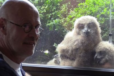 Man Shares Apartment With Family Of Huge Owls