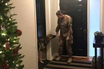 Soldier Returns Home, Catches Her Dog Off Guard For A Moment