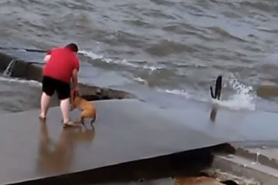 Disturbing Video Shows Lady Throwing Dog In Lake Erie