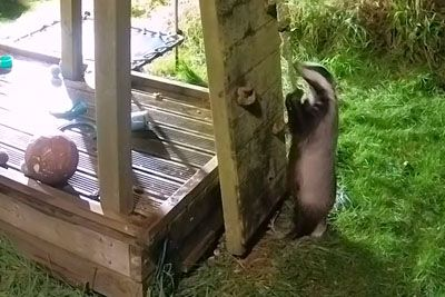 Guy Builds His Kids A Playground But Wild Animals Move In