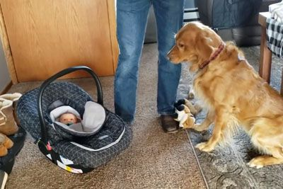 Family Dog Has Adorable Reaction To New Baby