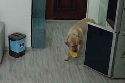 Dog In China Sneaks Ice Cream While Owner Is Asleep