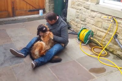 German Shepherd Cries Out In Happiness When Seeing Owner After Months Apart