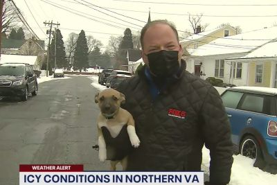 Adorable Puppy Crashes Reporter's Weather Report On Live TV