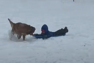 Great Reason To Get A Golden Retriever Dog