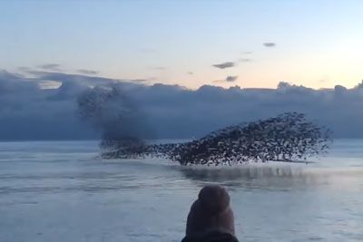Birds Fly Over Water In Beautiful Shape-Shifting Patterns