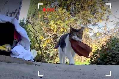 Cat Keeps Stealing Things From The Neighbors