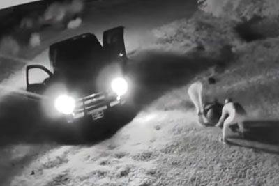 Thieves Run Over 200-Pound Galapagos Tortoise