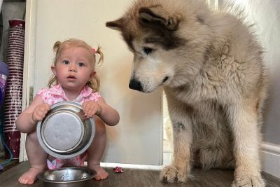 Cute Baby Girl Feeds Her Giant Dog