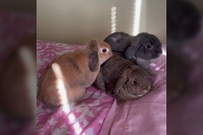 Mama Bunny Sees Her Baby After Six Months, Has Sweet Reunion