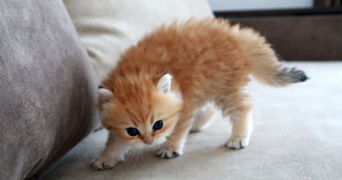 The Most Dangerous Kitten In The World Klipland Com